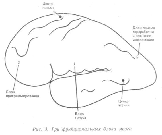 Три функции блока мозга
