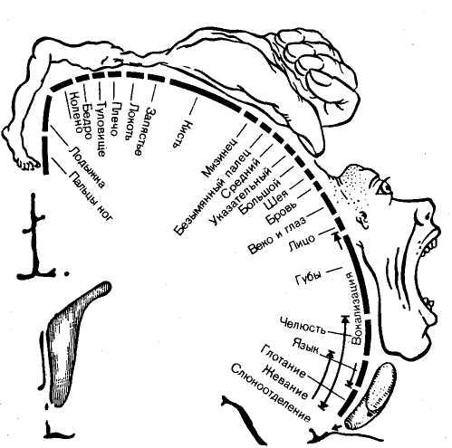 Гомункулус